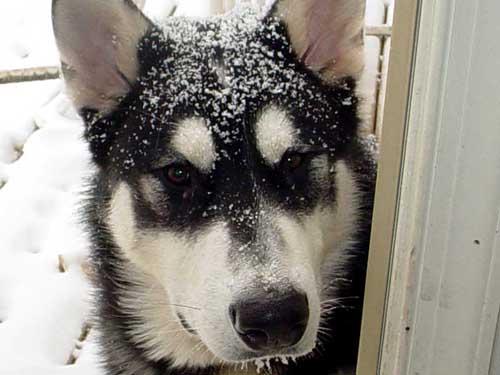 Sebastian lvoing the snow