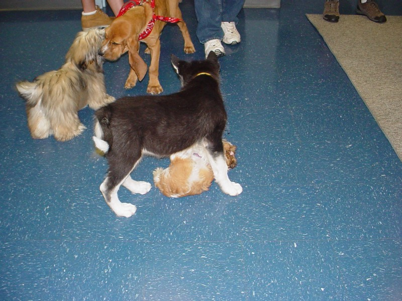 Sebastian at Puppy Kindergarten